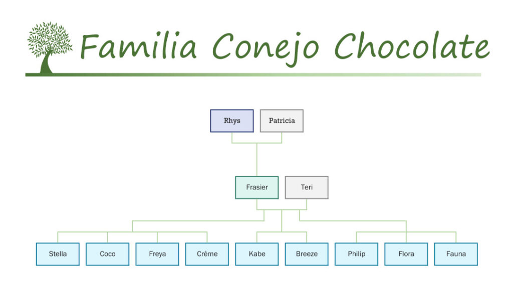 Familia Conejo Chocolate Sylvanian